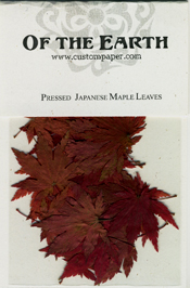Pressed Japanese Maple Leaves