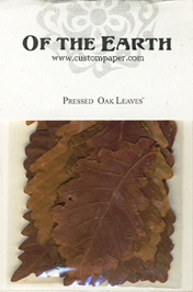 Pressed Oak Leaves