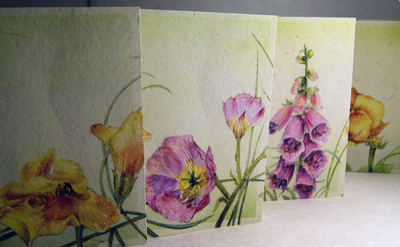 Seeded Wildflower Collection Set of 4 Cards