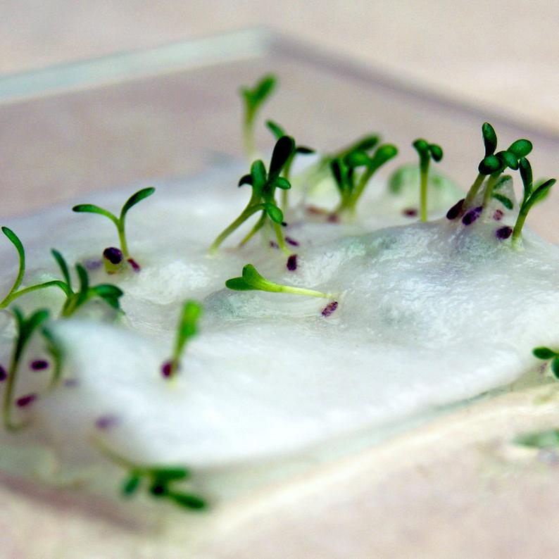 Seed paper sprouting