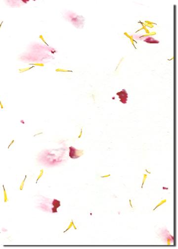 Fothergilla custom handmade paper